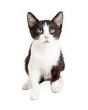 Cute Kitten Ready to Pounce Stock Photo
