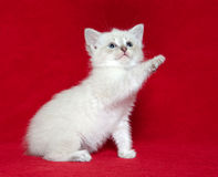 Cute kitten on red Stock Photo