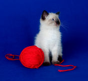 Cute kitten with red ball of yarn Stock Image