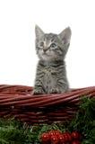 Cute kitten in red basket Stock Image
