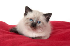Cute kitten on red blanket Royalty Free Stock Photography