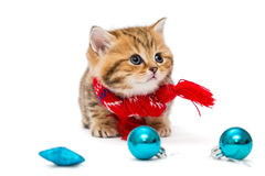 Cute kitten  in a red scarf Stock Images