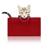 Cute kitten in a red shopping bag Stock Photography