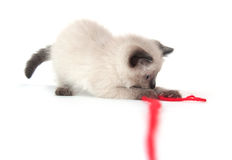 Cute kitten with red yarn Stock Photography