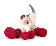 Cute kitten and red yarn Stock Image
