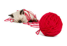 Cute kitten and red yarn Stock Images