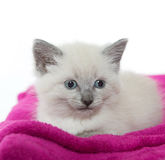 Cute kitten resting on blanket Stock Photography
