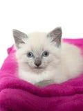 Cute kitten resting on blanket Stock Image