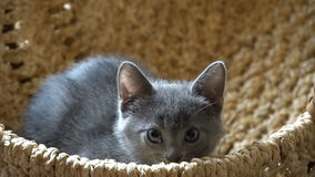 Cute kitten resting in the room stock footage