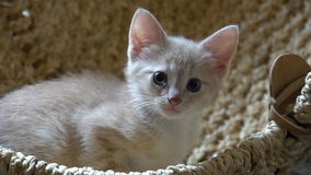 Cute kitten resting in the room stock video
