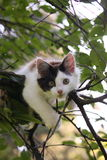 Cute kitten resting on the tree branch Royalty Free Stock Photos