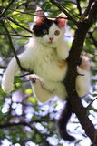 Cute kitten resting on the tree branch Royalty Free Stock Images