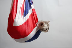 Cute kitten in a sack Stock Photo