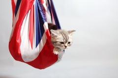 Cute kitten in a sack Stock Image