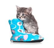 Cute kitten. Serious little kitten with fleece bootee over white background cutout Stock Photography