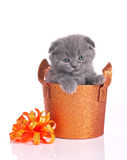 Cute kitten in shiny basket Stock Photos