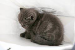 Cute kitten in a shopping bag Stock Photography