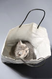 Cute kitten in a shopping bag Stock Image