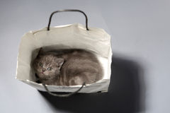 Cute kitten in a shopping bag Royalty Free Stock Photo