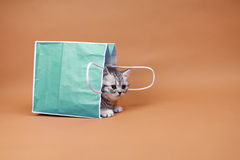 Cute kitten in a shopping bag Stock Photos