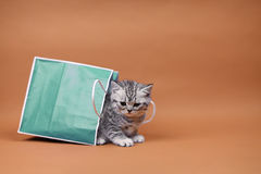 Cute kitten in a shopping bag Royalty Free Stock Images