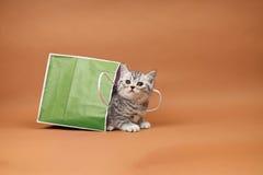 Cute kitten in a shopping bag Stock Image
