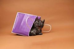 Cute kitten in a shopping bag Royalty Free Stock Photos