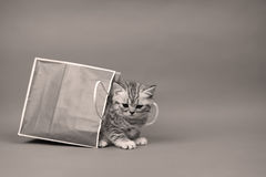 Cute kitten in a shopping bag Royalty Free Stock Image