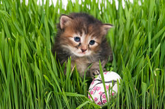 Cute kitten. Cute siberian kitten with Easter egg over bright green grass background. Focus on the kitten Royalty Free Stock Photography