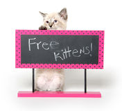 Cute kitten with sign Stock Photo