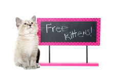 Cute kitten with sign Royalty Free Stock Photo