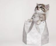 Cute kitten in silver box. Cute little kitten in silver box royalty free stock image