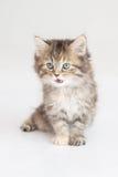 Cute Kitten. Sitting on  background Stock Photo