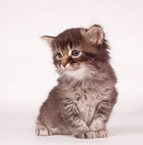 Cute kitten sitting down Royalty Free Stock Image