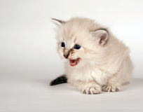 Cute kitten sitting down Stock Photos