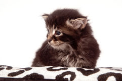 Cute kitten sitting down Stock Image