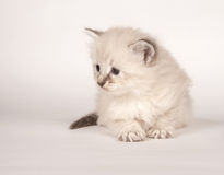 Cute kitten sitting down Stock Photo