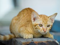 Cute kitten sitting down to look carefully. Royalty Free Stock Photography