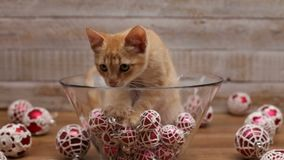 Cute kitten sitting in glass bowl with christmas ball decorations stock video