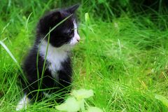 Cute kitten sitting in the grass. stock image