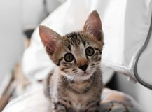 The cute kitten sitting and looking for something.  Stock Image