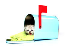 Cute kitten sitting in mailbox Royalty Free Stock Photo