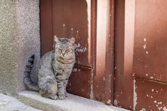 Cute kitten sitting near the colorful door. In summer in Porto, Portugal Stock Photography