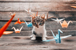 Cute kitten sitting among paper origami cranes Royalty Free Stock Photos