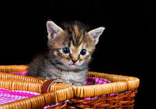 Cute kitten sitting in a small basket Royalty Free Stock Photos