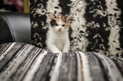 Cute kitten sitting Royalty Free Stock Image