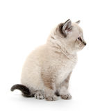 Cute kitten sitting on white Stock Photos