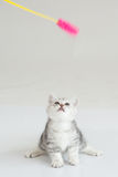 Cute Kitten. Sitting on white background Royalty Free Stock Photo