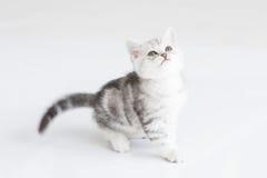 Cute Kitten. Sitting on white background Stock Photo
