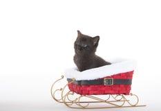 Cute kitten in slde Royalty Free Stock Photo